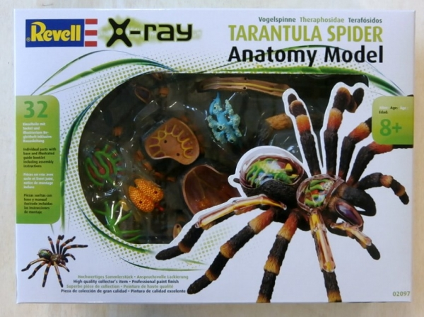 02097 TARANTULA SPIDER ANATOMY MODEL