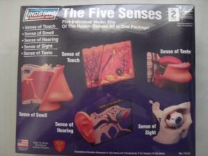 LINDBERG  71315 THE FIVE SENSES